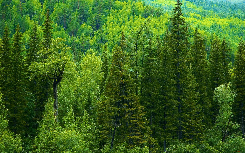 бини, леса на территории россии картинки мансардные